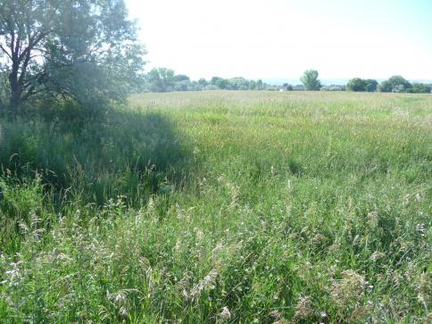 Lot 4 Berean Road <br />Billings, MT 59105<br />Active
